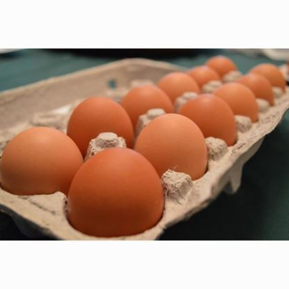 eggs-large-1-dozen