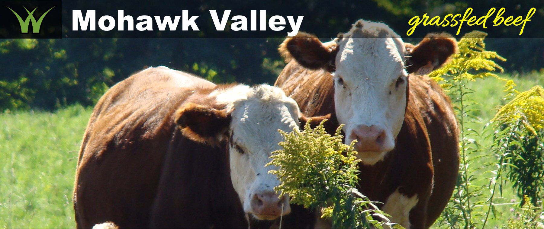 Mohawk Valley Grassfed Beef